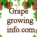 Grape Growing And Making Your Own Signature Wine
