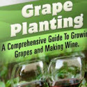 Grape Growing System