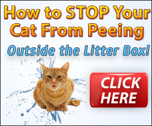 Stop your Cat Spraying in the House
