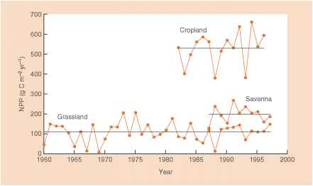 Coniferous Forest Seasonal Trends