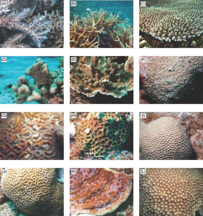 Scleractinian Coral Colony Structure