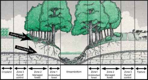 Riparian Buffer Diagram
