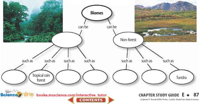 Concept Map Primary Succession