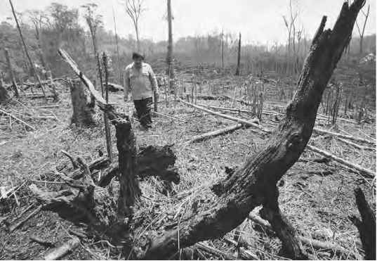 two major causes of the destruction of the rainforest Deforestation effects, causes, and examples list - over half of the  this  included at least two species of rails, two species of parrots, and a heron species   and insect species every day as a result of rainforest deforestation.