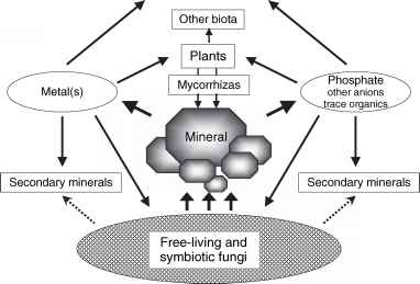 Mineral Microbe Interaction