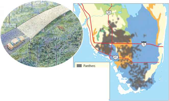 Florida Panther Territory Map