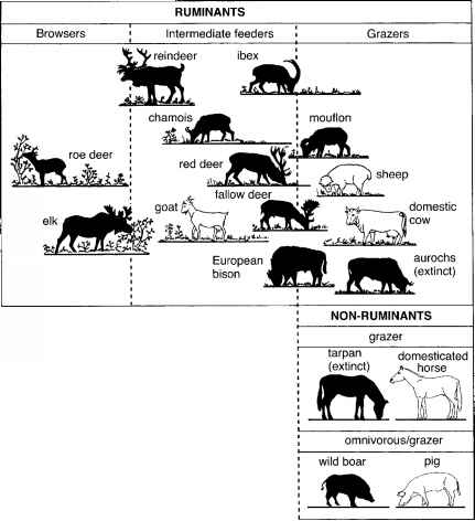 Rainforest Herbivores