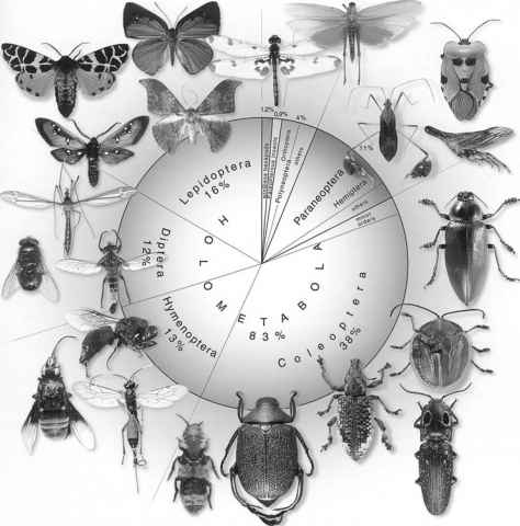 Insect Groups